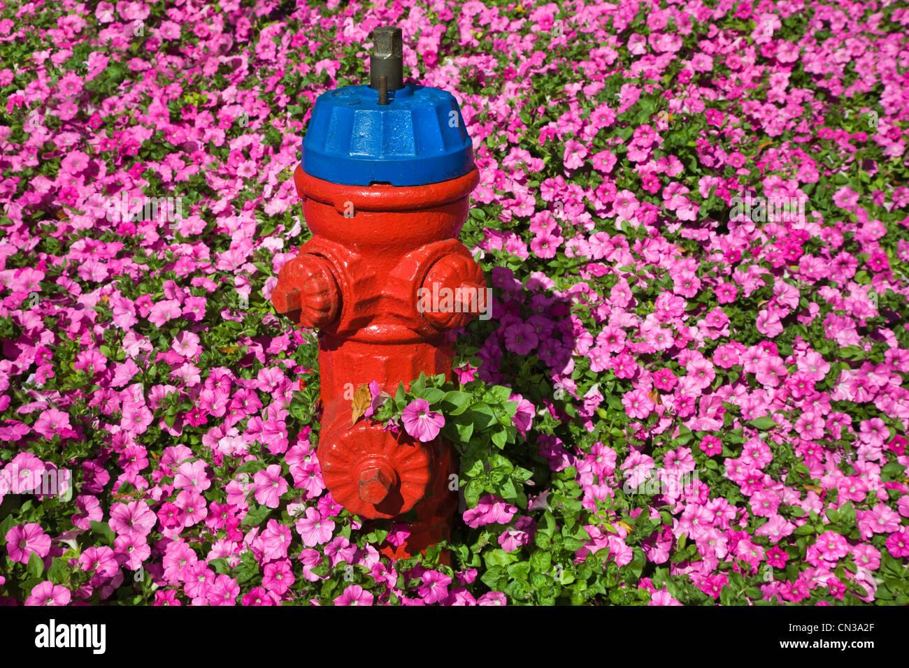 Idrante di fuoco e fiori di colore rosa Immagini Stock
