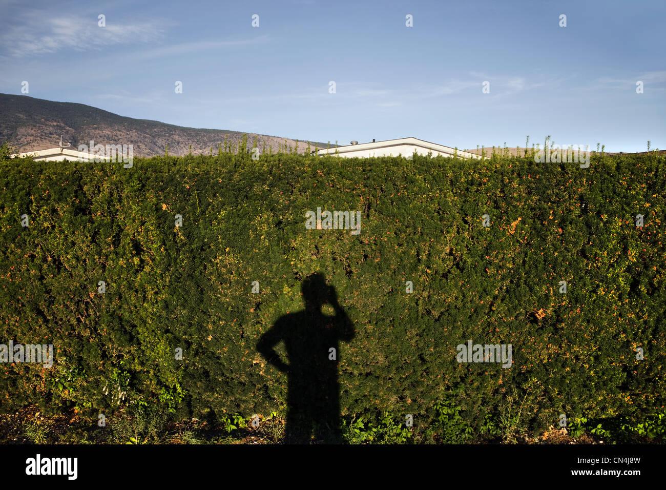 Ombra di uomo con cellulare su hedge Immagini Stock