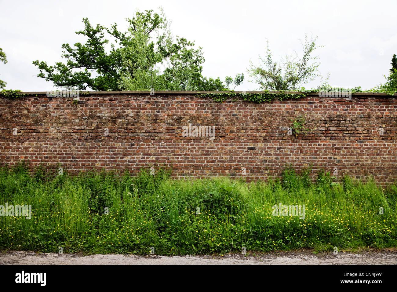 Muro di mattoni e piante Immagini Stock