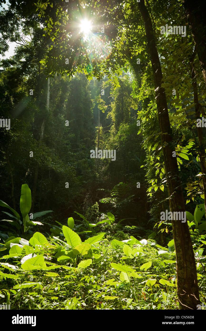 Scena Jungle su Koh Yao Noi, una delle isole della Tailandia. Immagini Stock