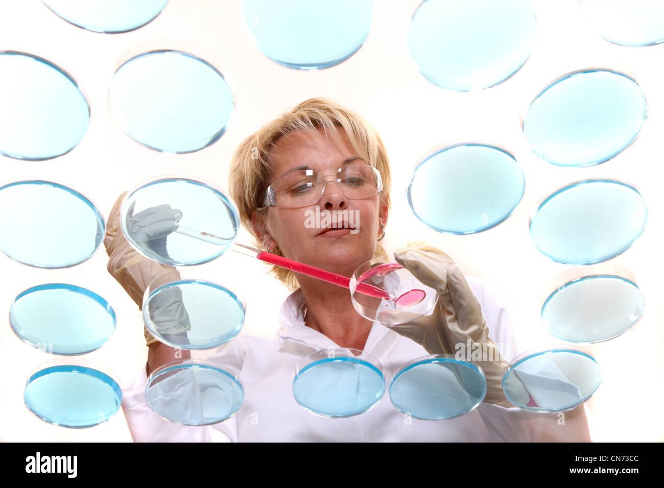 Tecnico di laboratorio in laboratorio con le colture di batteri in capsule di Petri. Visto attraverso un tavolo Immagini Stock