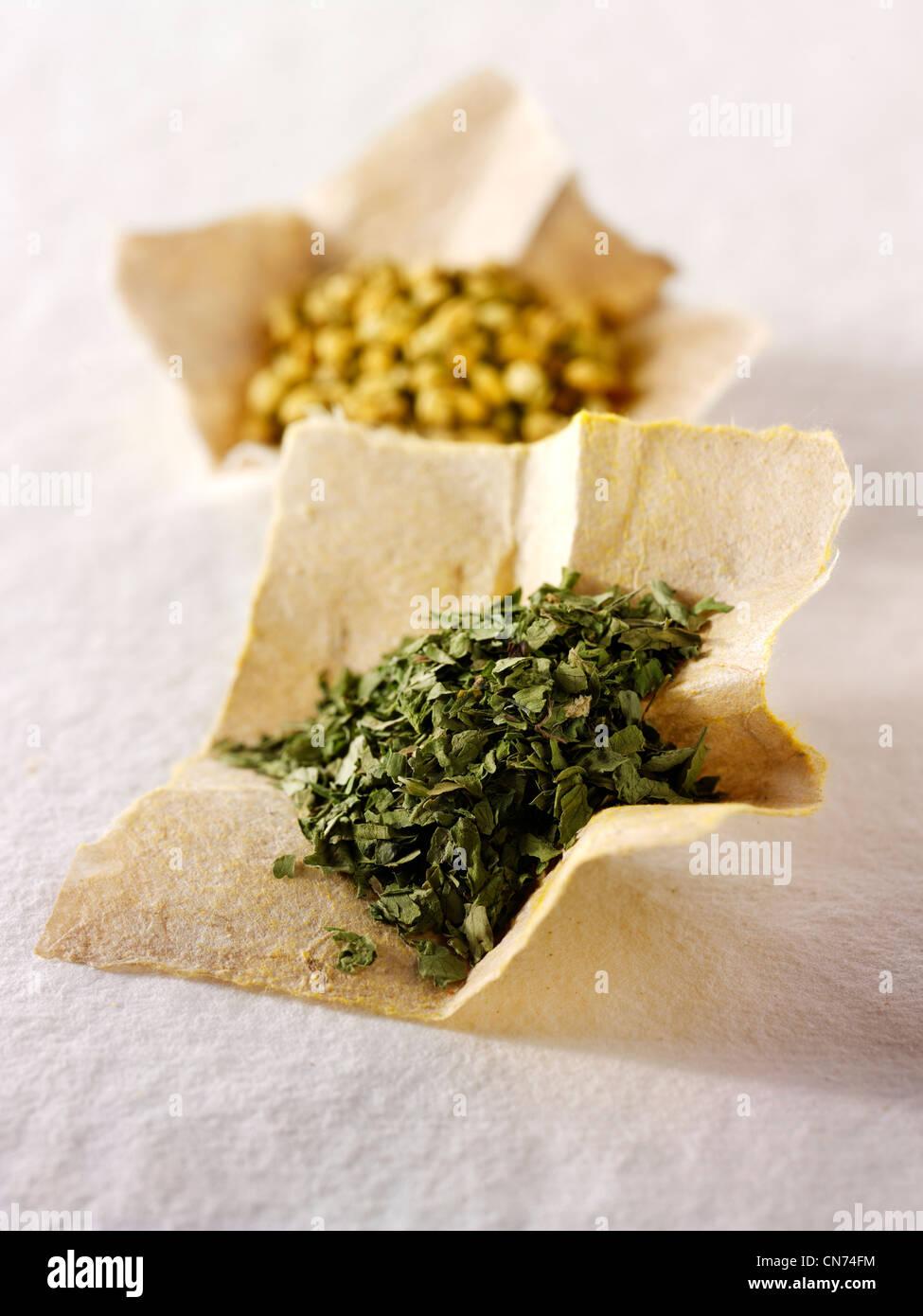 Foglie Corinder herb & di coriandolo in polvere spice Immagini Stock