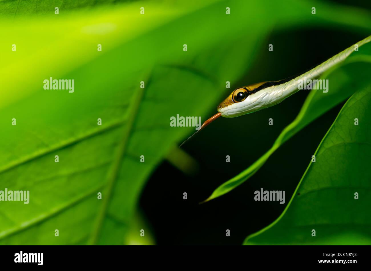 Piccolo serpente nel verde della natura o nella foresta Immagini Stock