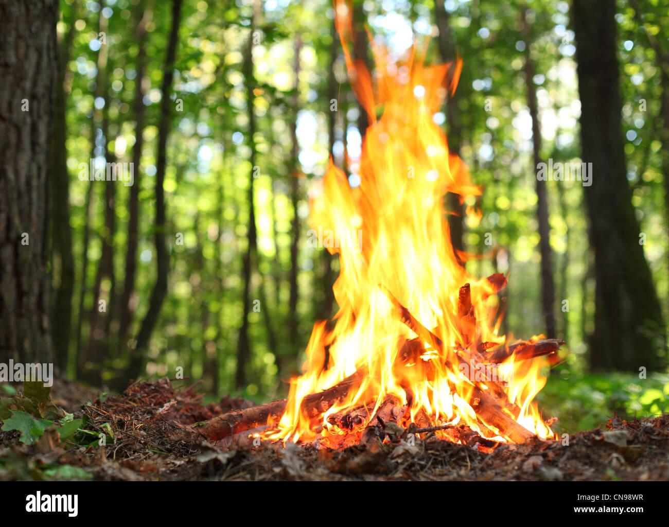 Il falò nella foresta. Immagini Stock