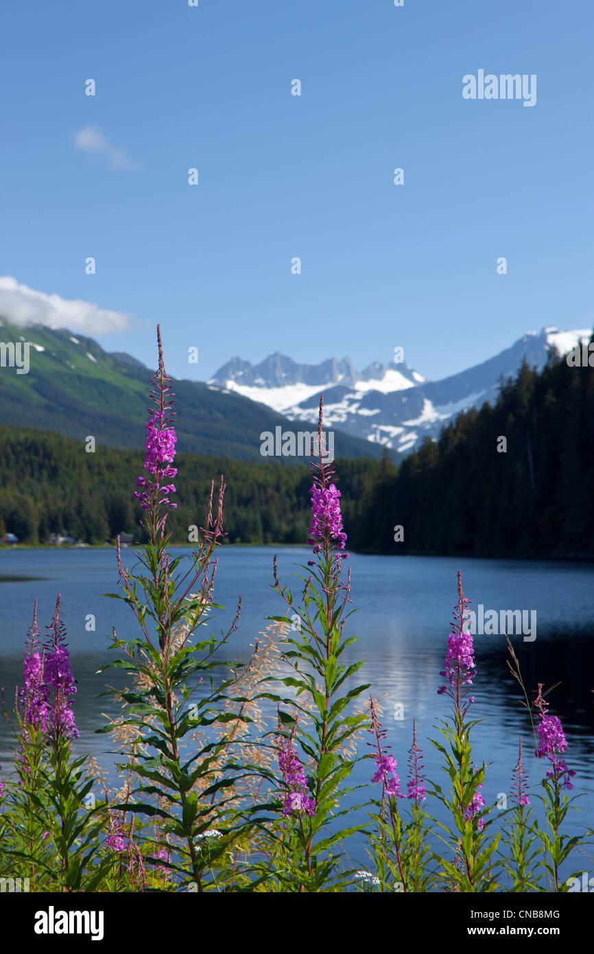 Vista panoramica del lago Auke e Fireweed con Mendenhall Glacier e costiera montagne, a sud-est di Alaska, estate Foto Stock