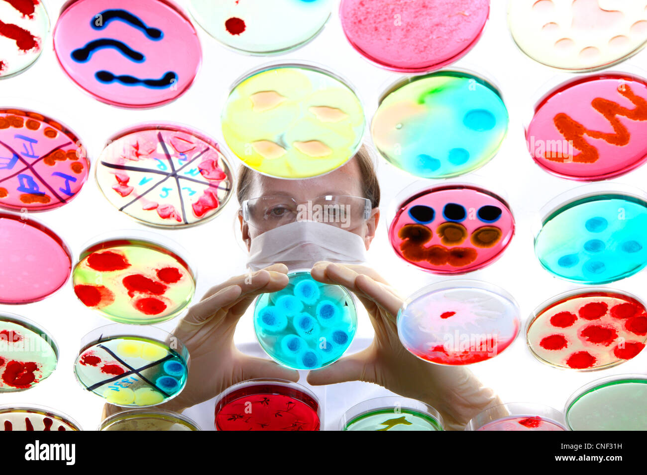Laboratorio biologico, chimico. Analisi di colture batteriche di batteri in crescita in piastre di Petri. Immagini Stock