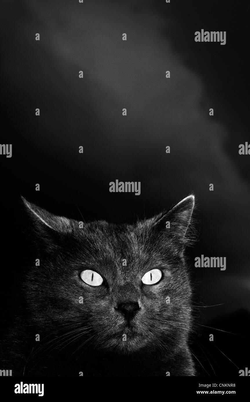 Gatto nero sotto il cielo notturno Immagini Stock