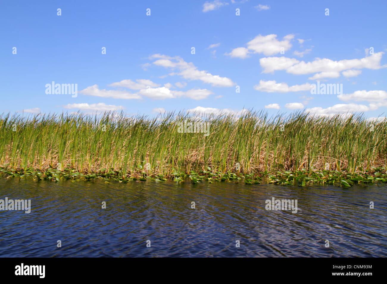 Fort Lauderdale Ft. Everglades della Florida Wildlife Management Area di Conservazione di acqua area 3A sawgrass Immagini Stock