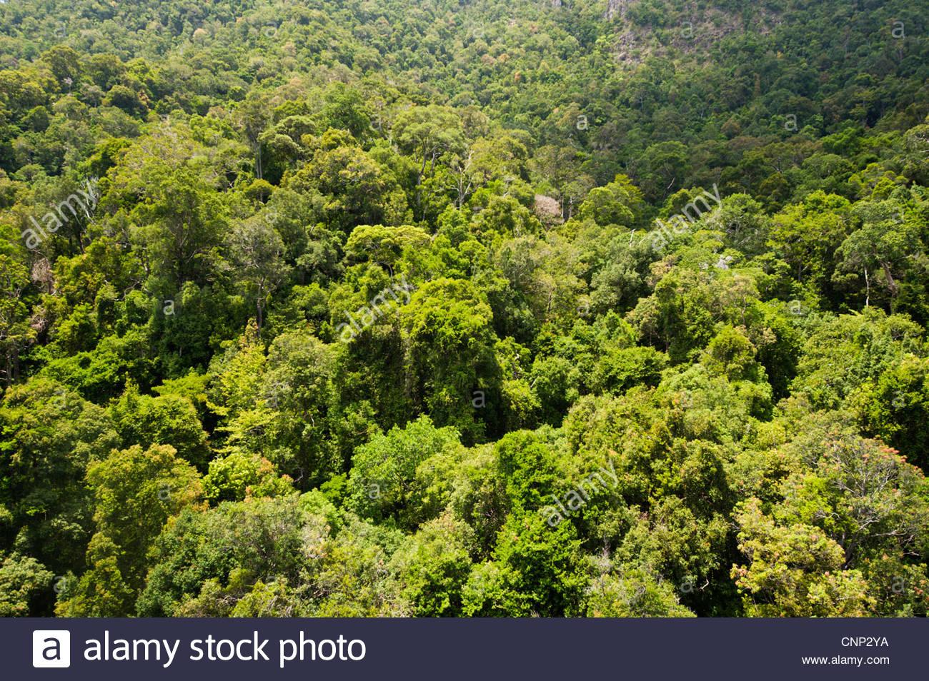 La foresta pluviale, Langkawi, Malesia Immagini Stock