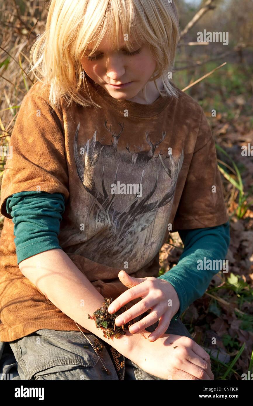 Comfrey comune (Symphytum officinale), poltiglia di tagliare e brayed foglie e radici ar applicata su una ferita, Immagini Stock