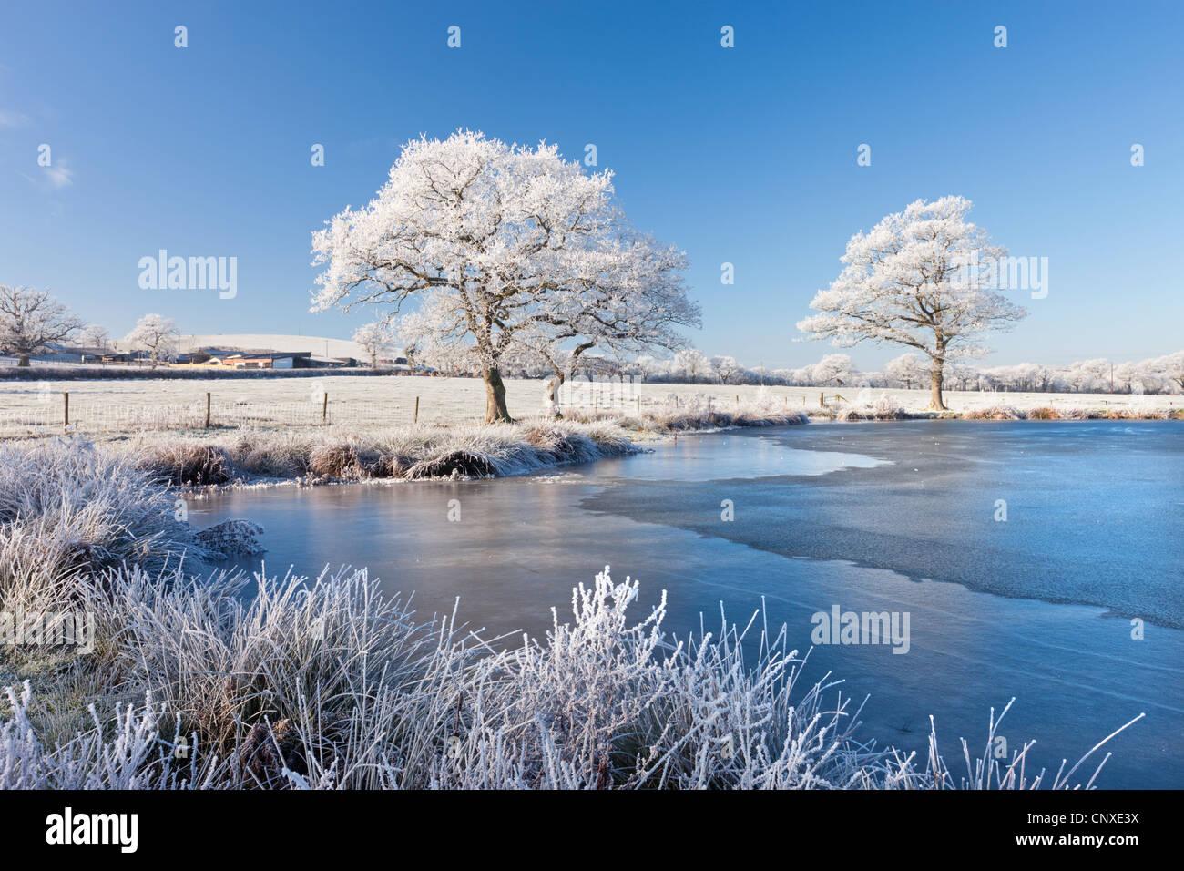 Bianco satinato trasformata per forte gradiente di alberi e lago ghiacciato in un freddo inverno mattina, Morchard Immagini Stock