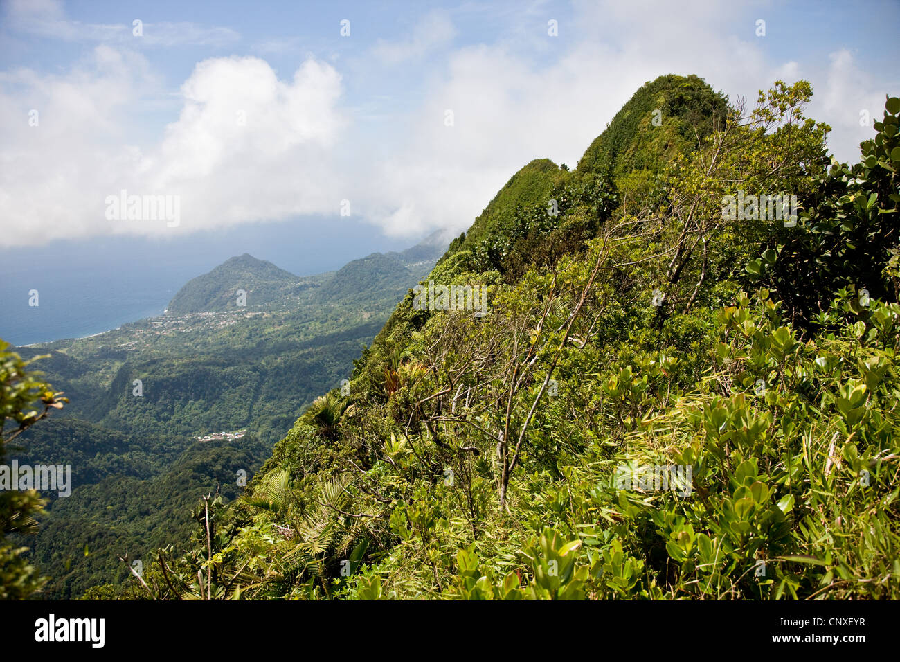 Vertice del Morne Anglais vicino Giraudel e Roseau in Dominica West Indies rivestita in foliatile gli alberi della Immagini Stock