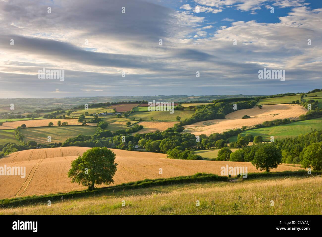 Bellissimo rotolamento Devon campagna sotto un magnifico cielo, Raddon Hill, Devon, Inghilterra. In estate (Luglio) Immagini Stock
