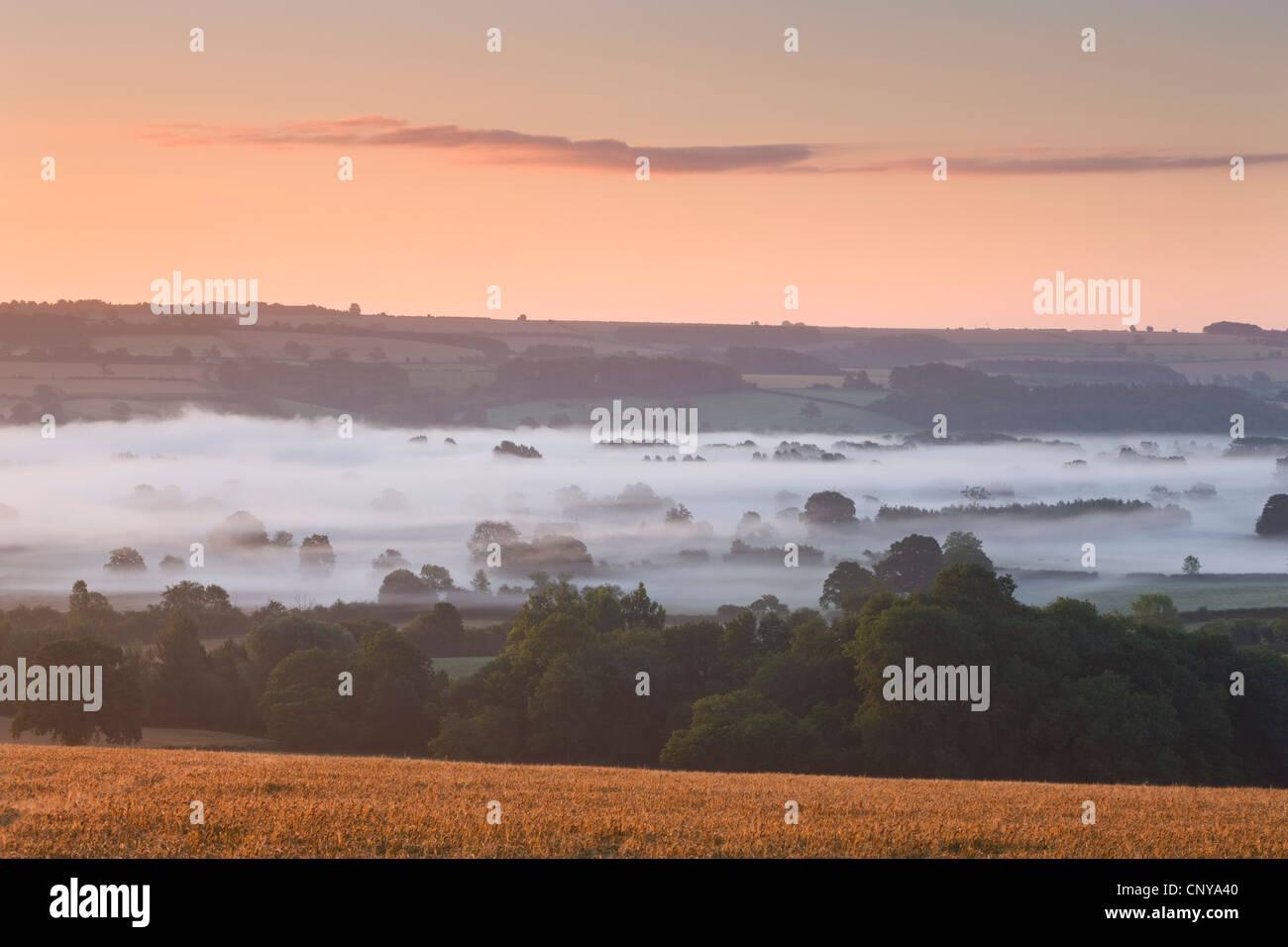 Nebbia copriva Cotswolds campagna vicino a Bourton sull'acqua, Gloucestershire, Inghilterra. Estate 2011 Immagini Stock