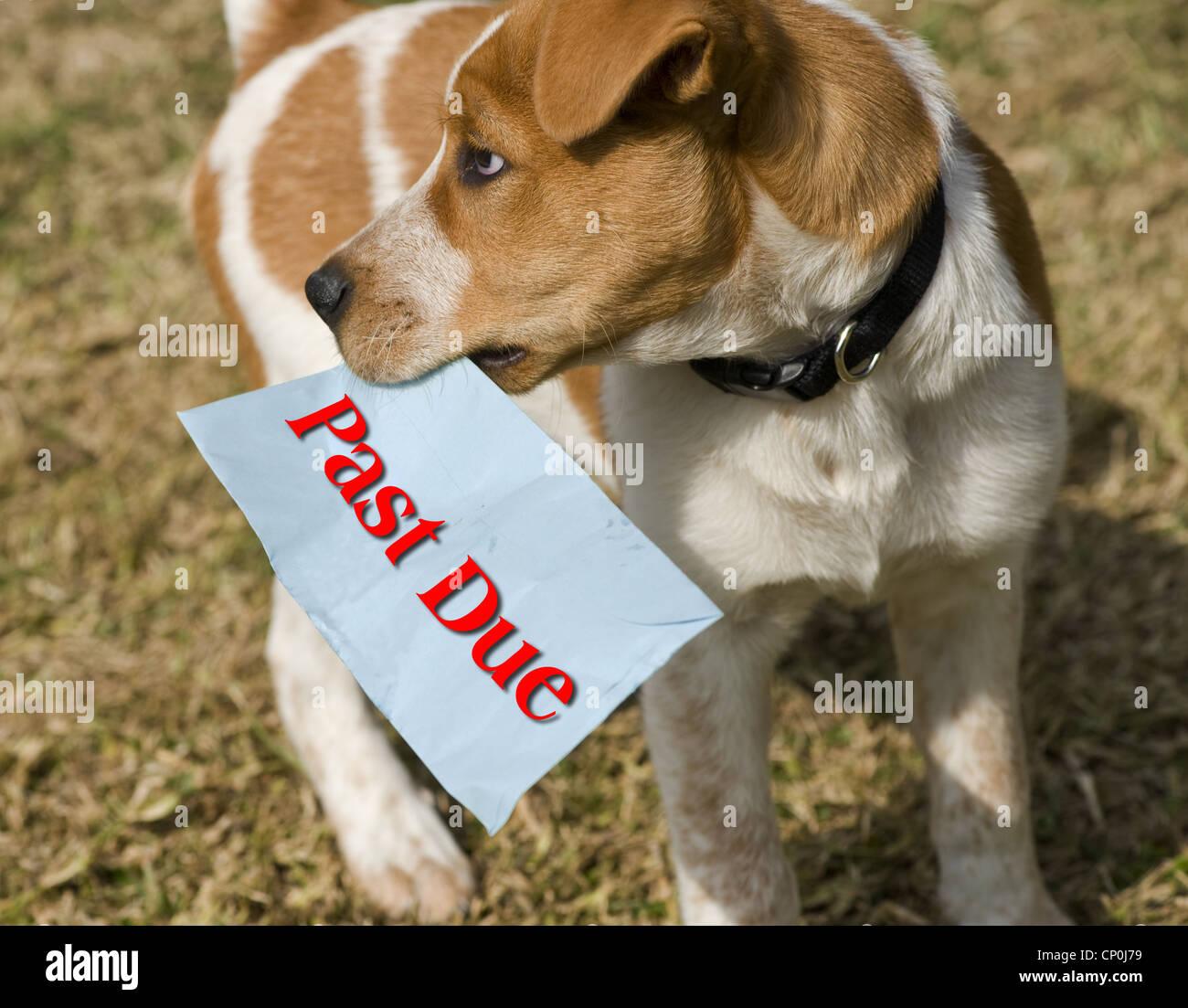 Il cane con il passato a causa di bill in bocca. Immagini Stock
