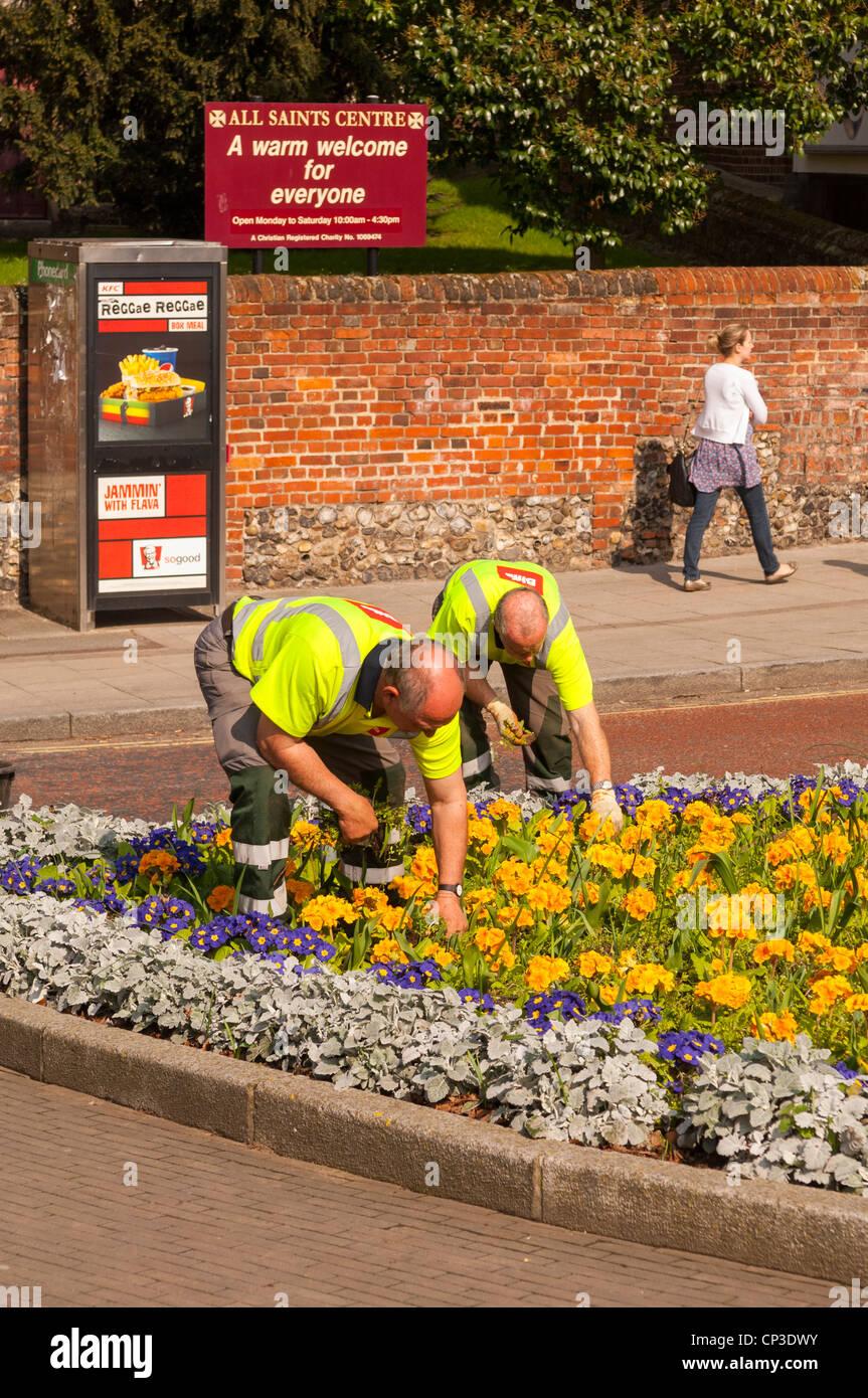 Biffa servizi di gestione dei rifiuti il giardinaggio e ripulendo dalle erbacce in Norwich , Norfolk , Inghilterra Immagini Stock