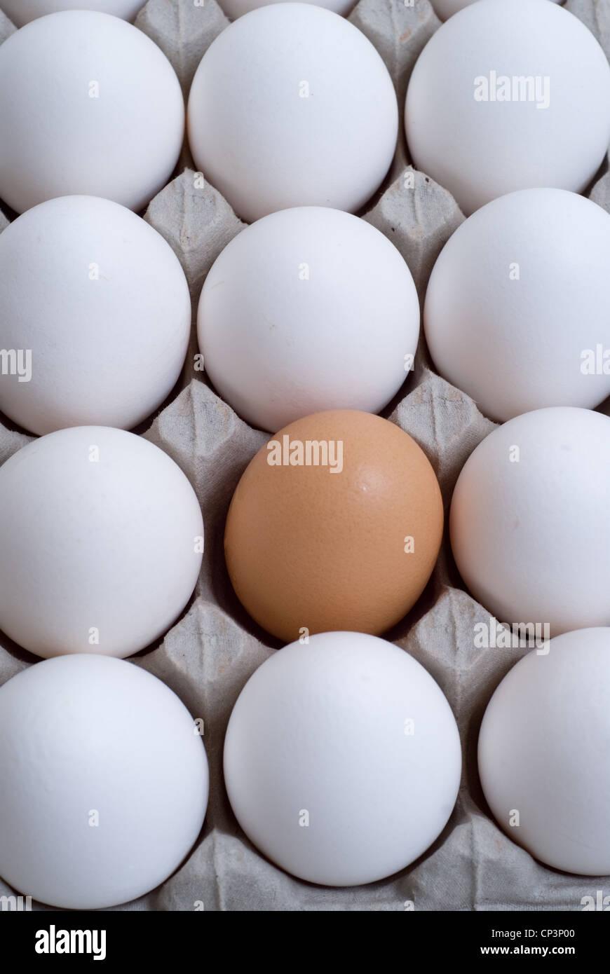 Le uova bianche con un uovo marrone, immagini concettuali. Immagini Stock