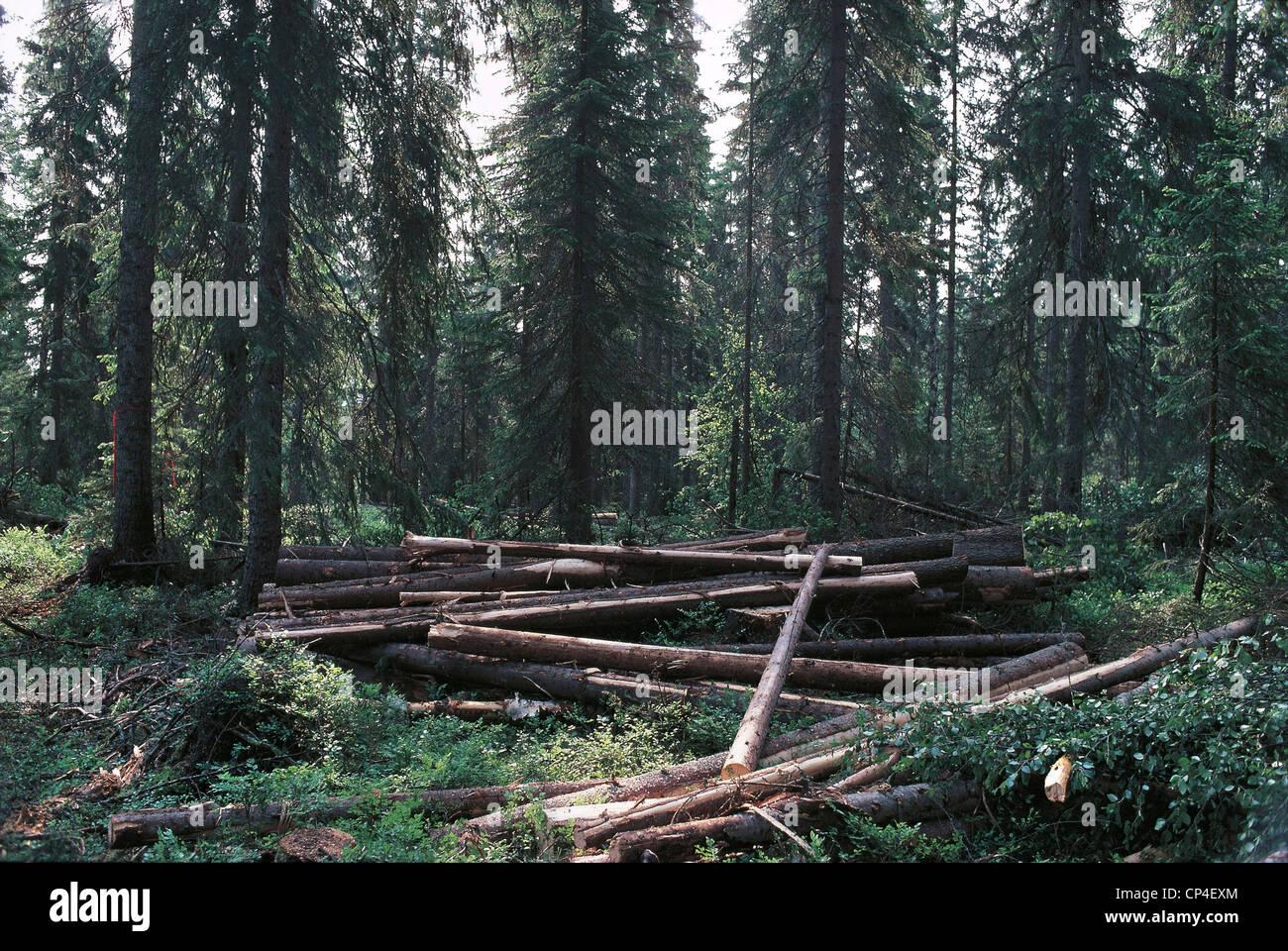 Svezia - Bollstabruck, la deforestazione. Immagini Stock