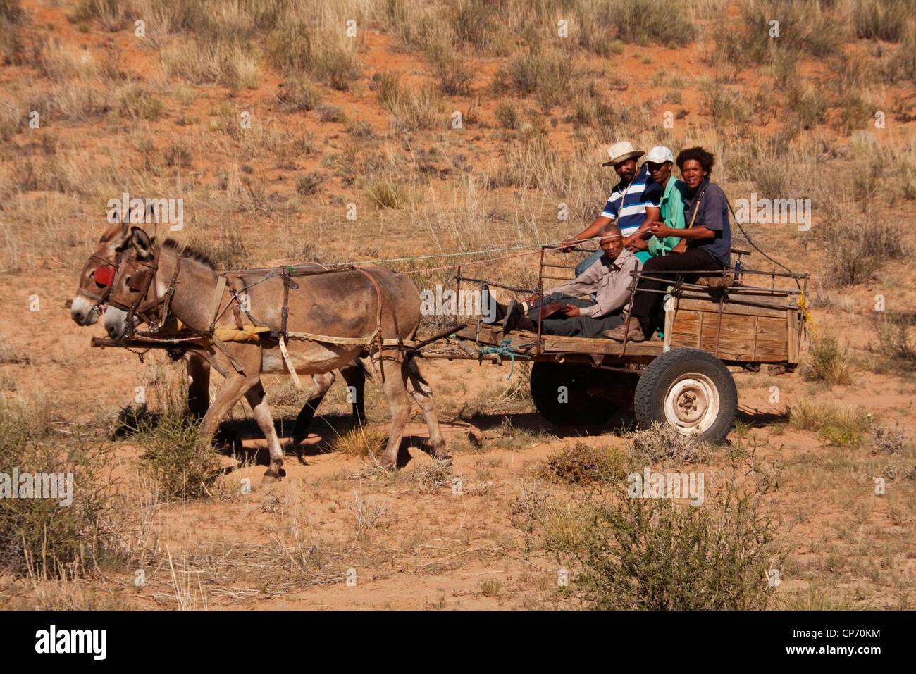 Kalahari locali cavalcando un asino carrello vicino Molopo Immagini Stock