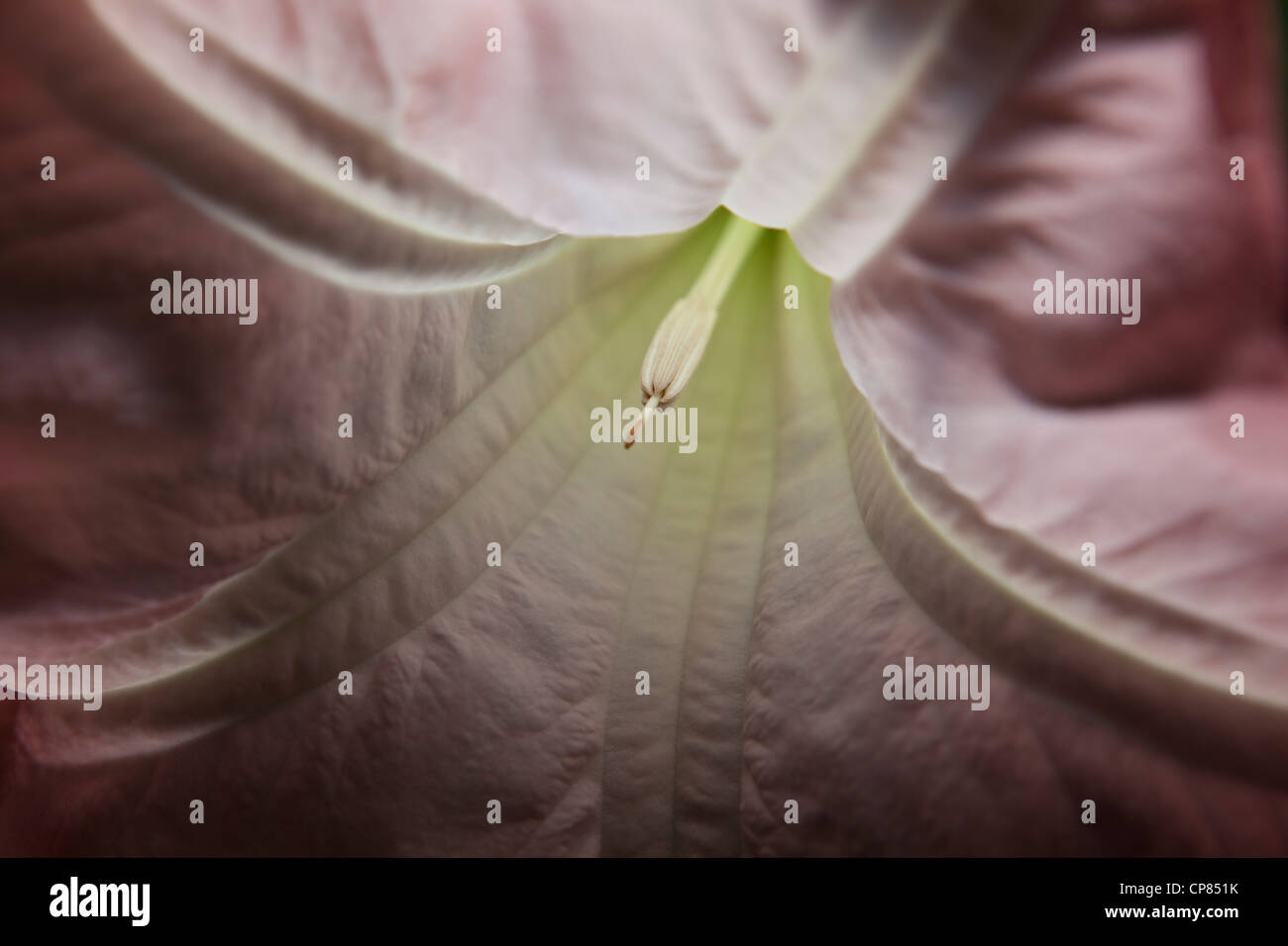 Girato a tenuta di un Moonflower di notte Immagini Stock