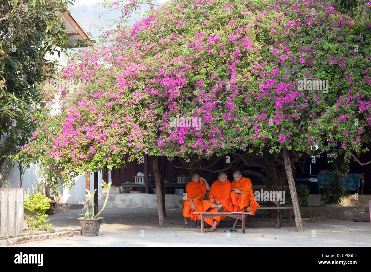In un area del tempio, giovane buddista novizio monaci manipolazione i loro telefoni cellulari in ombra di bougainvillea. Immagini Stock