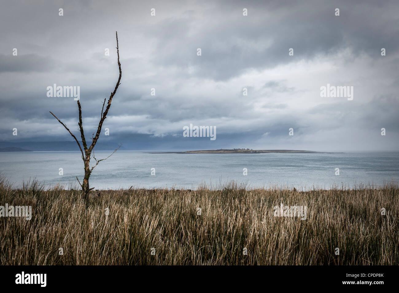 Albero morto guardando verso l'isola di Pabay dall'Isola di Skye, Highlands, Scotland, Regno Unito Immagini Stock