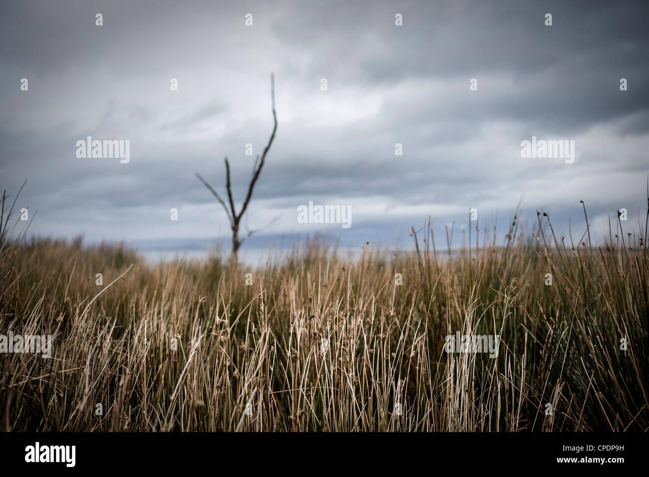 Albero morto ed erbe Isola di Skye, Highlands, Scotland, Regno Unito Immagini Stock