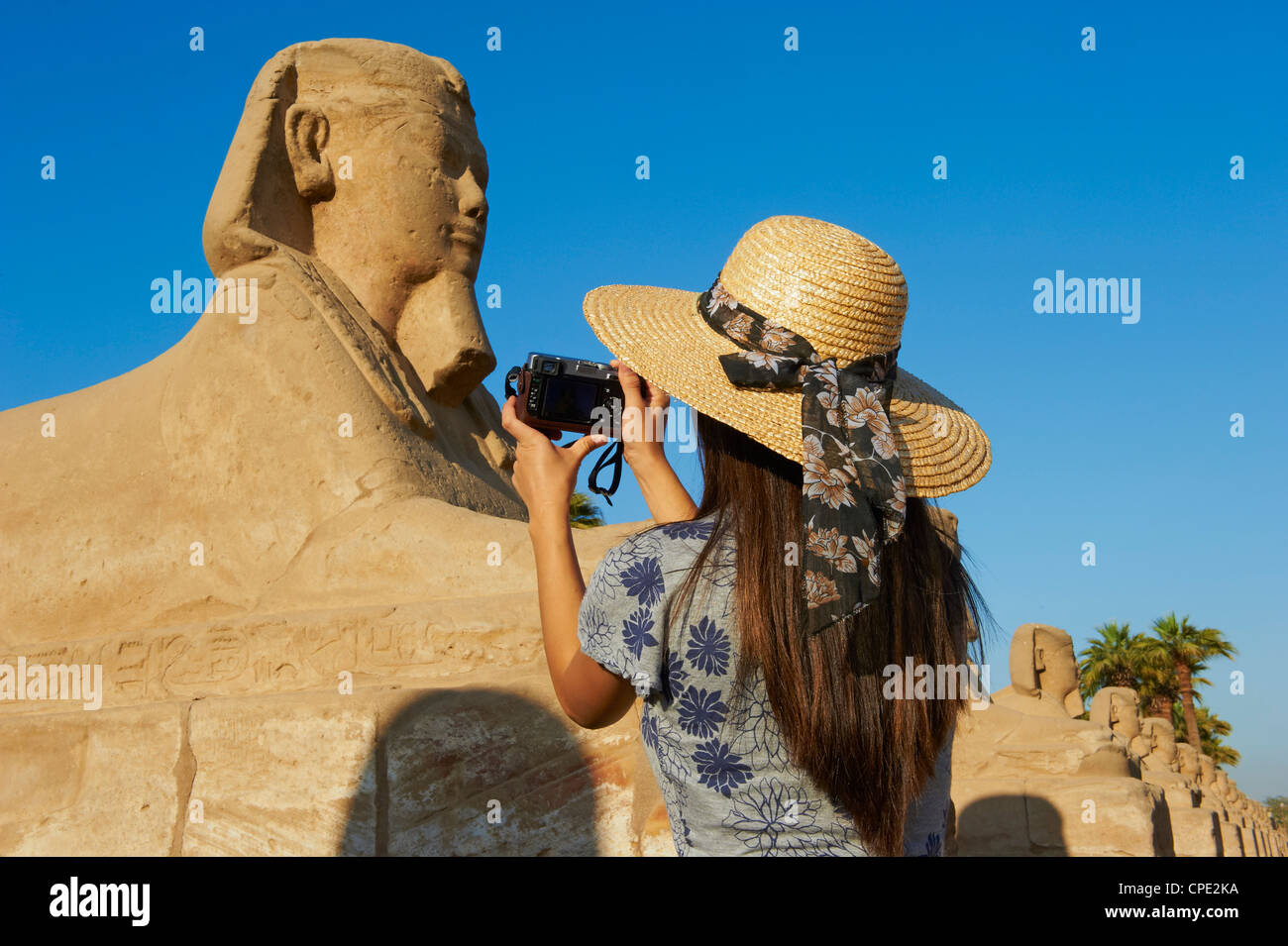 Turistica prendendo una foto sul percorso della Sfinge, Tempio di Luxor, Luxor, Tebe, Sito Patrimonio Mondiale dell'UNESCO, Immagini Stock