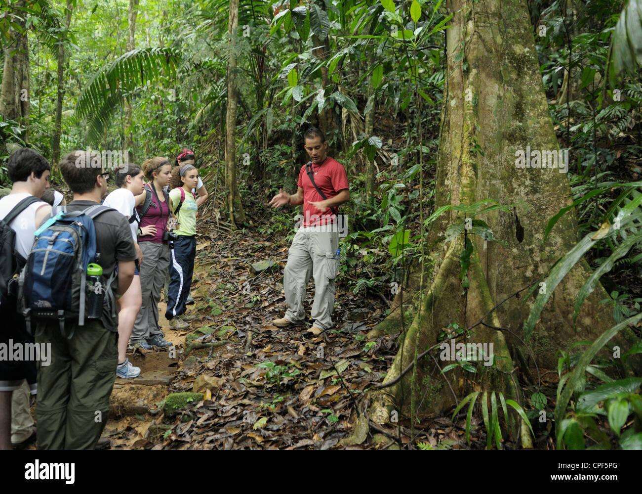 Gruppo di adolescenti ecotourists su una foresta pluviale ecologia a piedi, Selva Verde, Costa Rica. La loro guida Immagini Stock