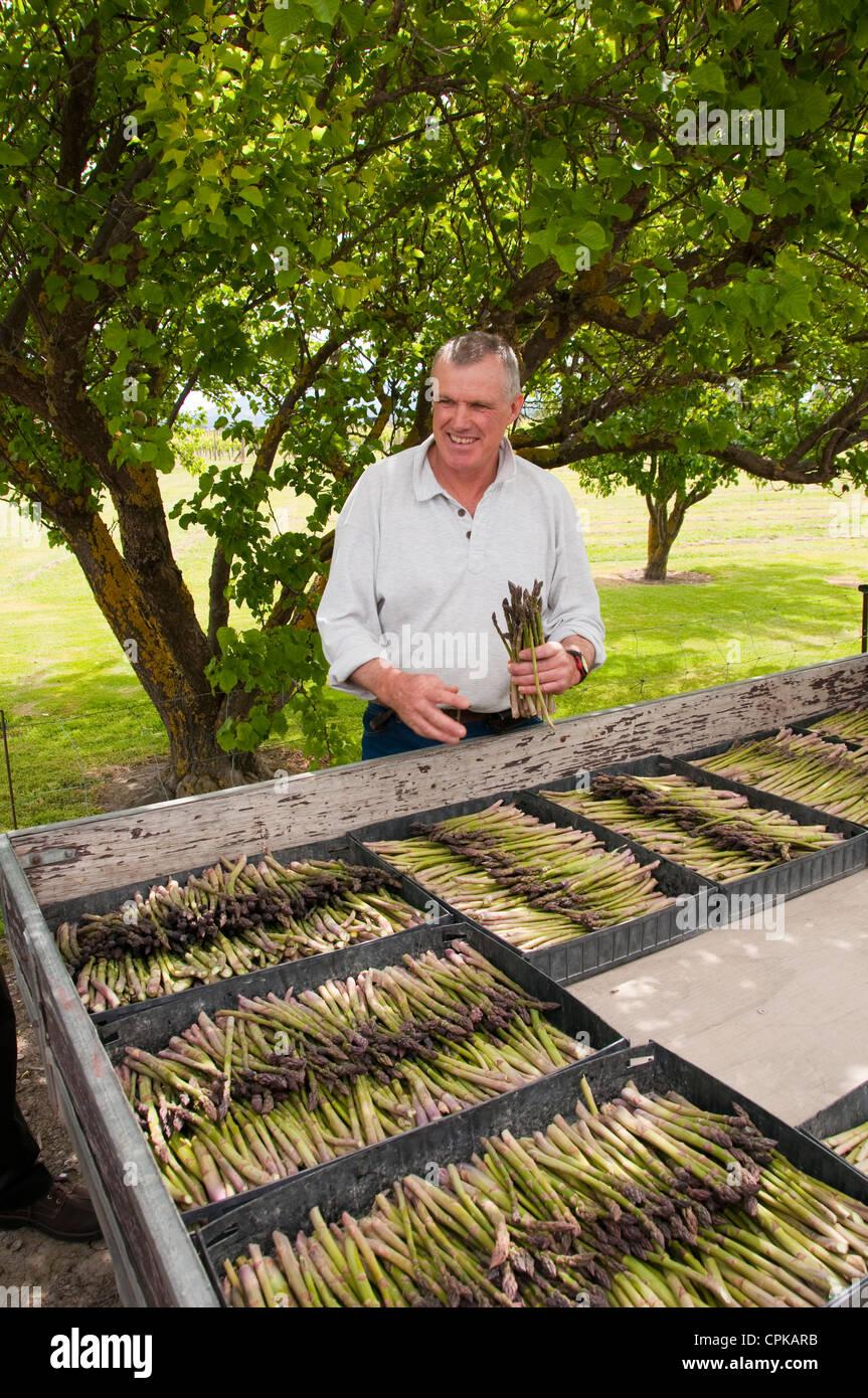 'Isola Sud della Nuova Zelanda Marlborough, asparagi agricoltura mostra Paul Scott di Scott fattoria di asparagi. Immagini Stock