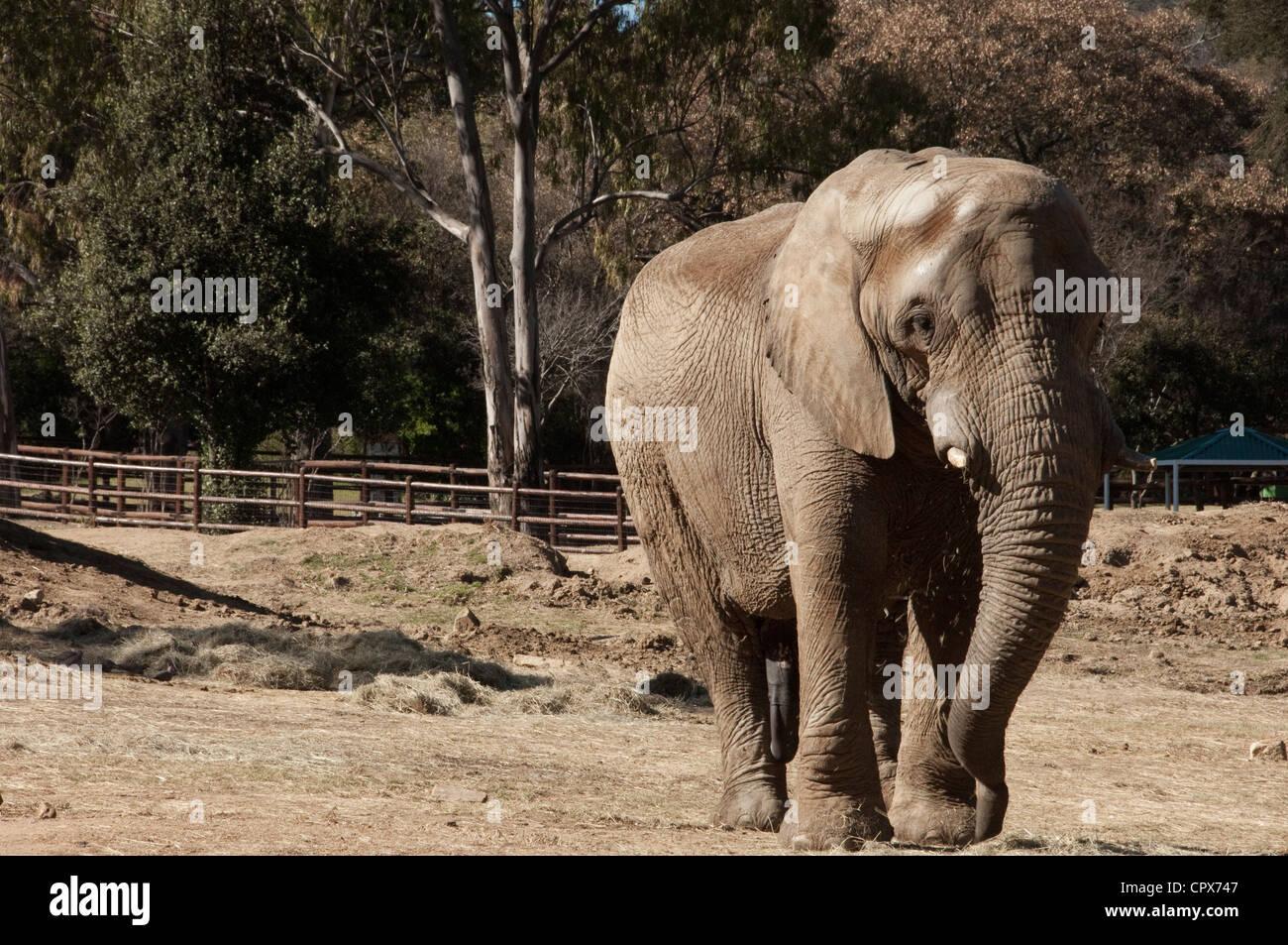 Paesaggio colpo di un elefante a piedi Immagini Stock