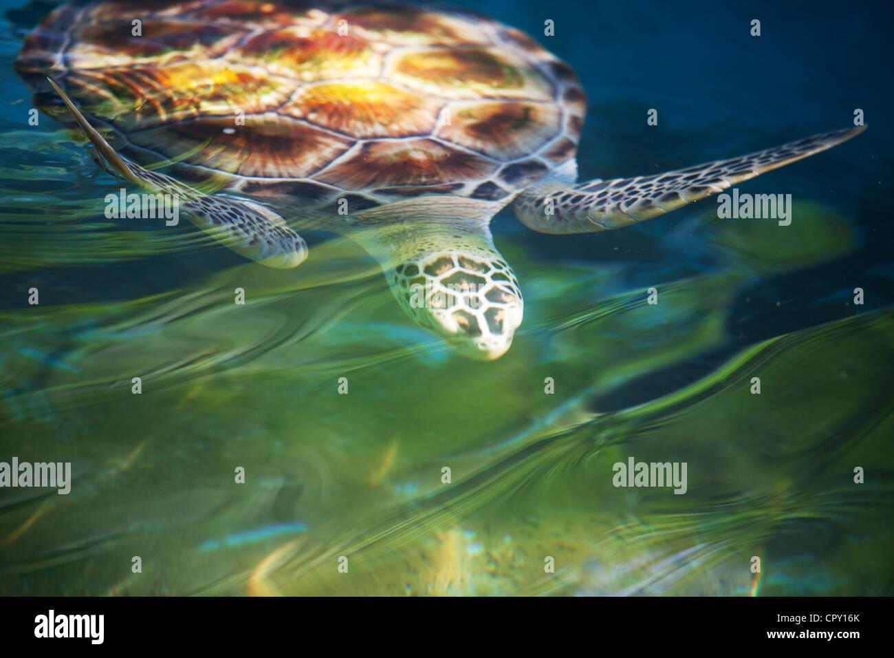 La tartaruga Immagini Stock