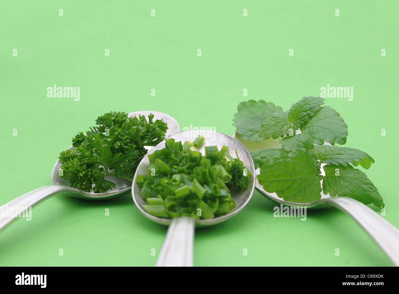 Erbe aromatiche fresche, prezzemolo, erba cipollina, menta, sul vecchio cucchiai Immagini Stock