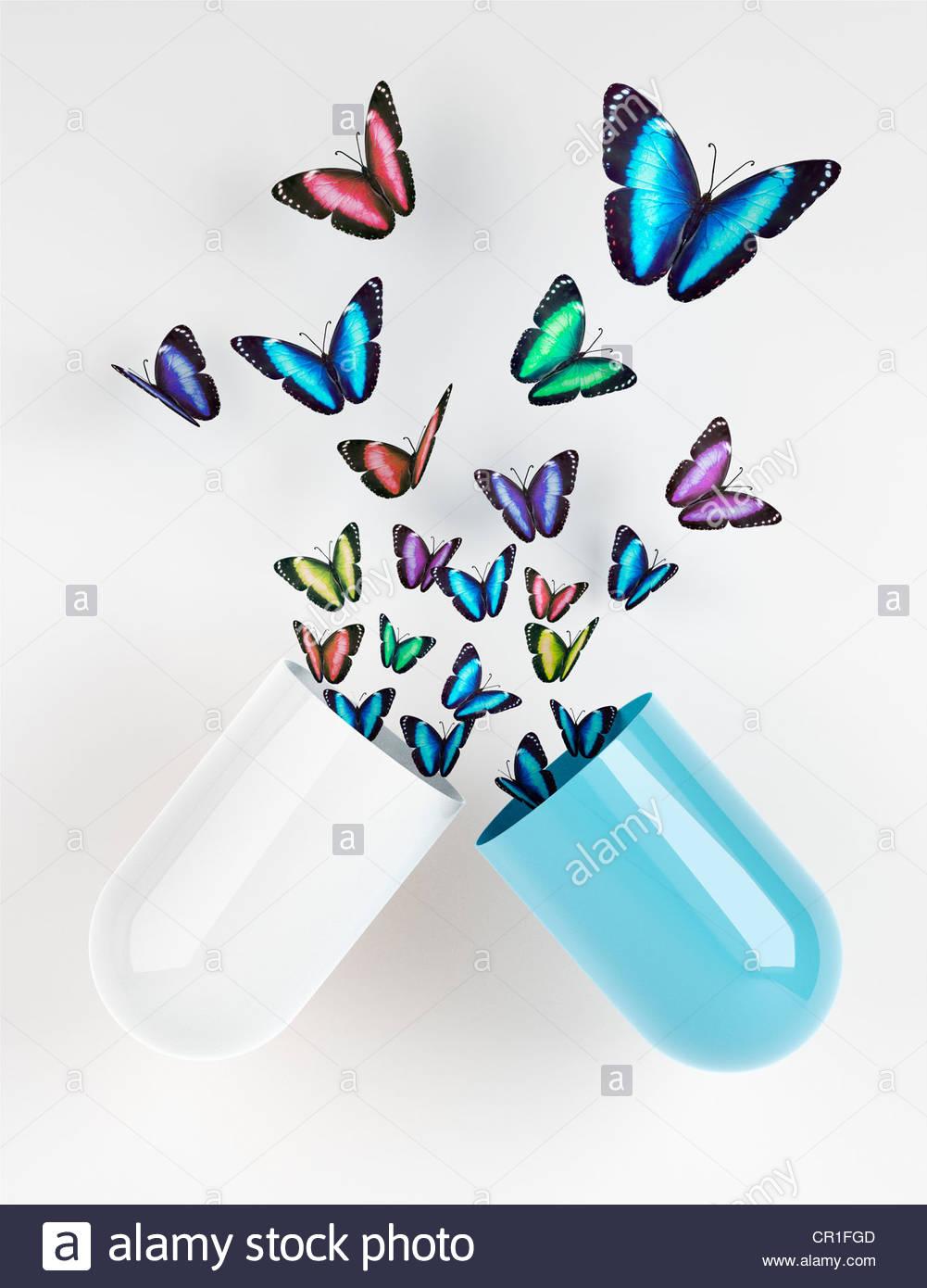 Farfalle emergente dalla capsula Foto Stock