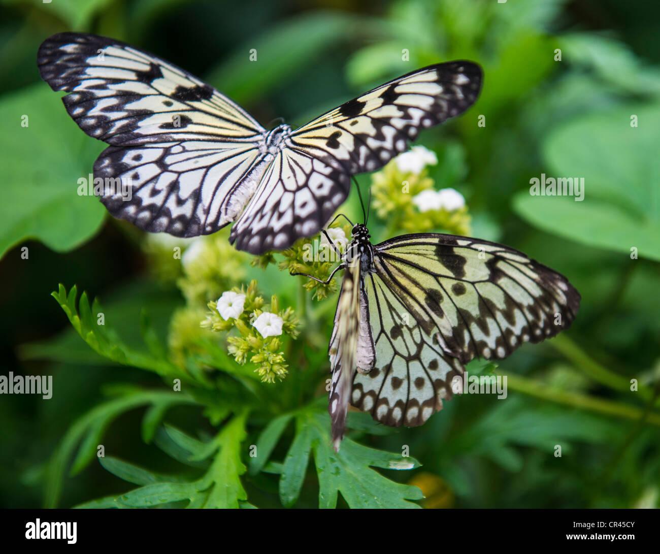La Butterfly Farm, Stratford upon Avon, Inghilterra Immagini Stock