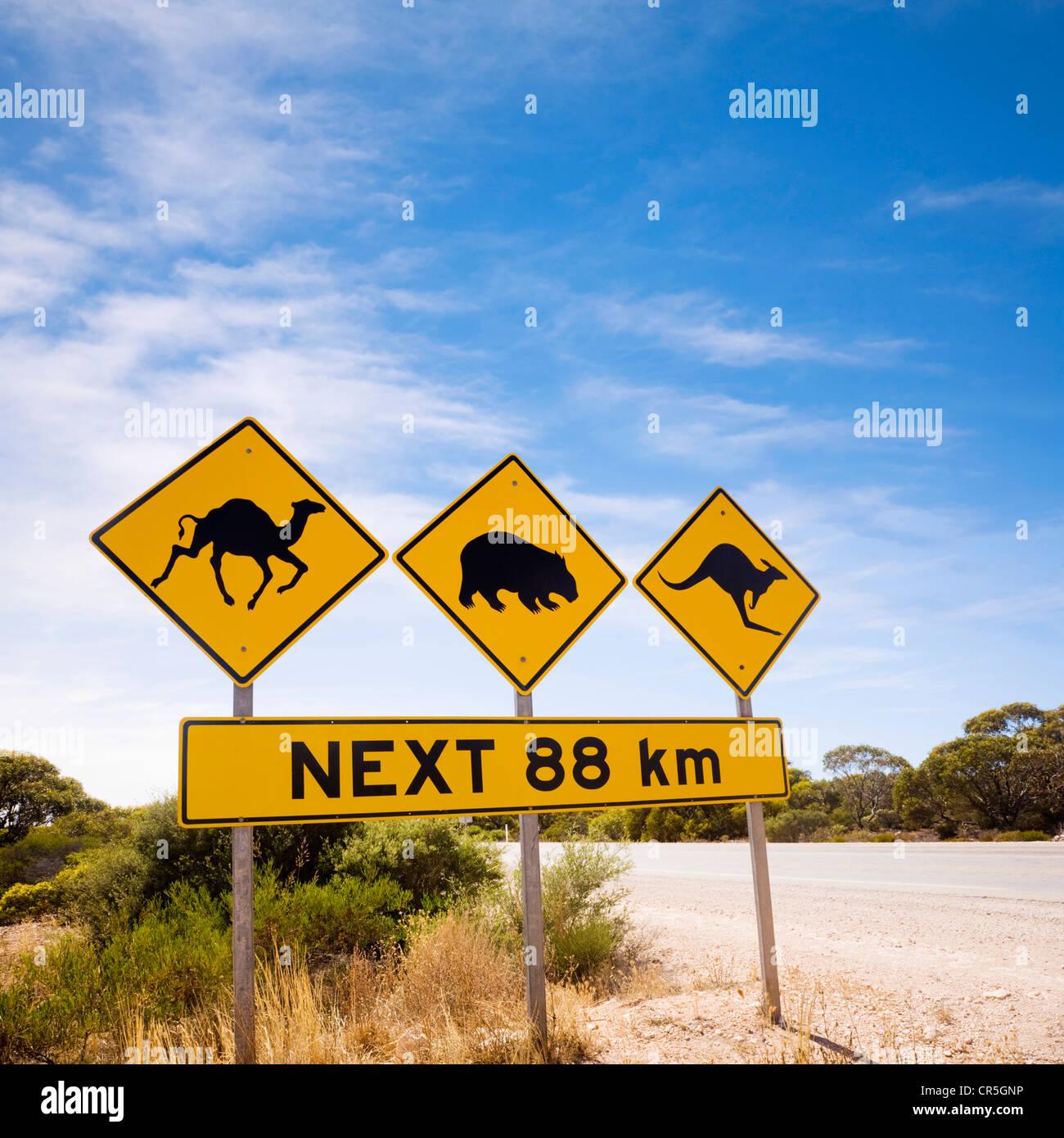 Famoso segno il Nullarbor Plain, Sud Australia, guardare fuori per cammelli, vombati, canguri. Immagini Stock