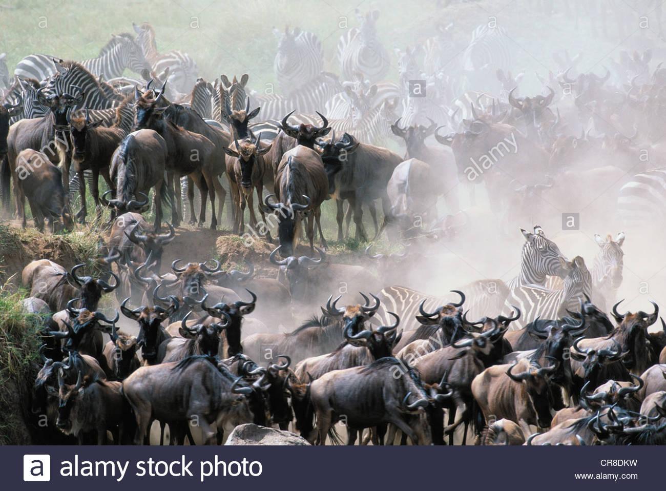Animals immagini animals fotos stock alamy for Cabine sul bordo del fiume