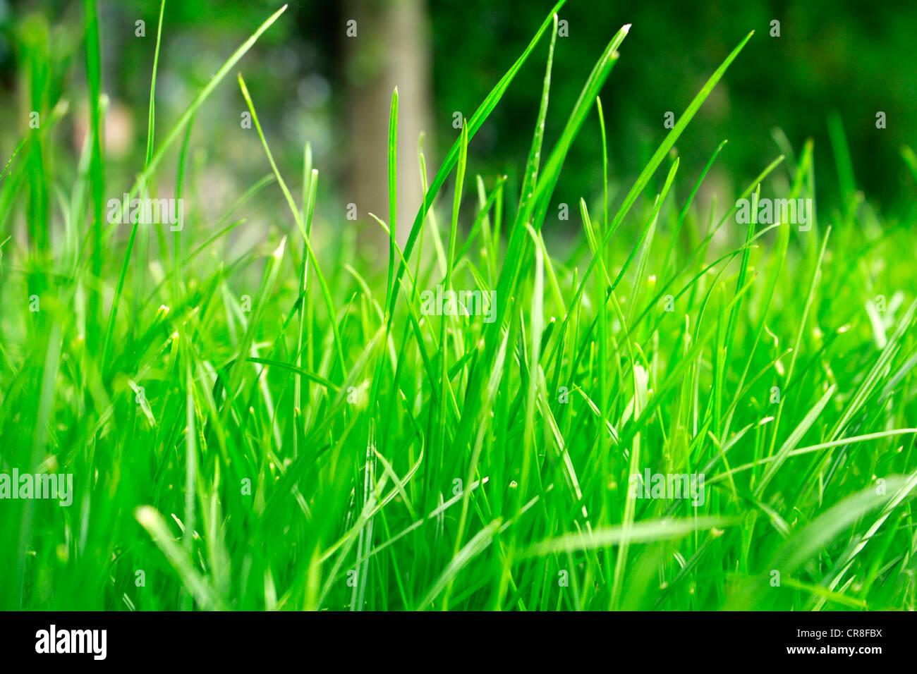 Erba verde vicino fino Immagini Stock