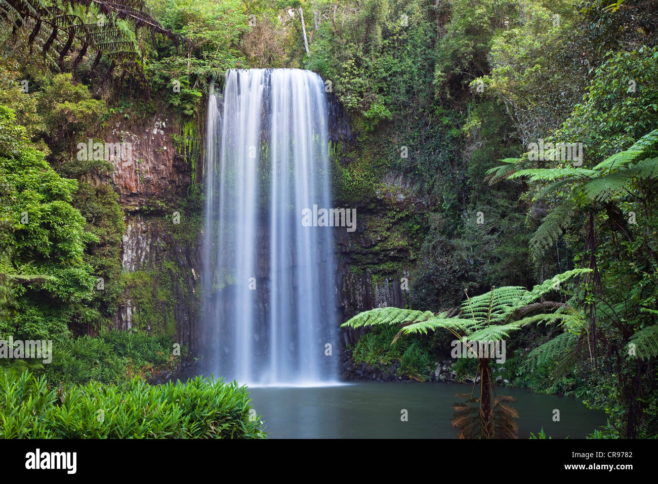 Millaa Millaa Falls, altopiano di Atherton, Queensland, Australia Immagini Stock