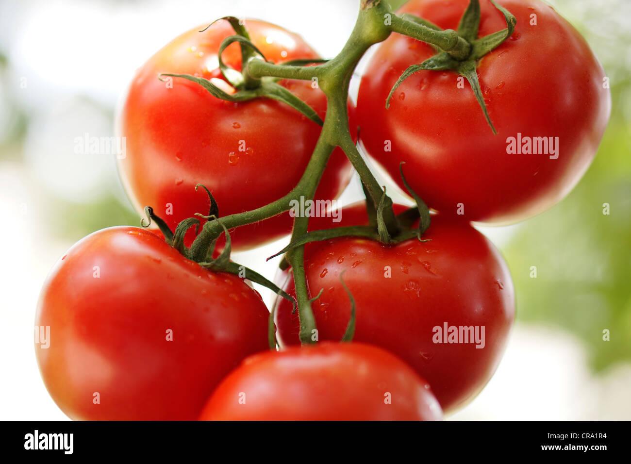 Pomodori a grappolo Immagini Stock