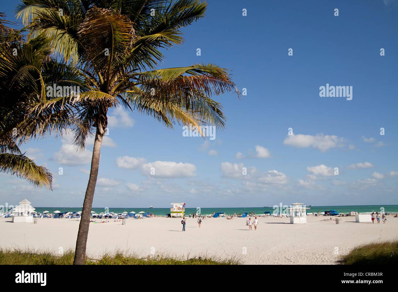 Palme da cocco sulla spiaggia, South Beach, Miami, Florida, Stati Uniti d'America Immagini Stock