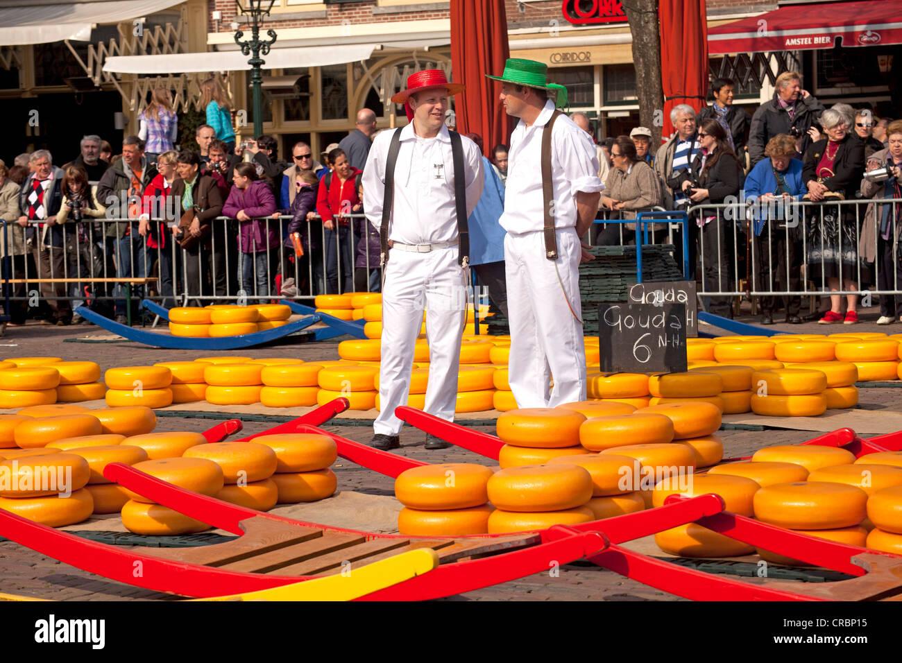Cheese Carrier sul mercato del formaggio di Alkmaar, North Holland, Paesi Bassi, Europa Immagini Stock