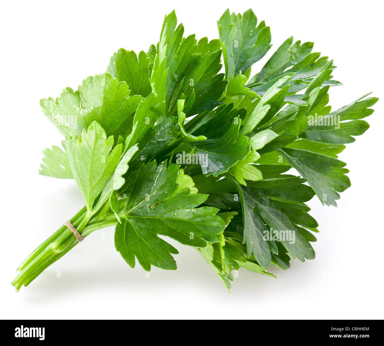Mazzetto di coriandolo verde su uno sfondo bianco. Immagini Stock
