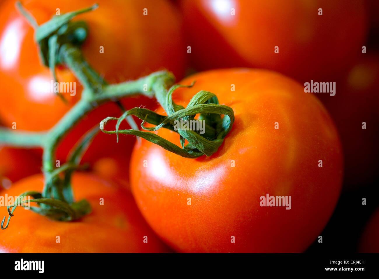 Cancro antiossidante cataratta Cibo Cibo roba alimentare frutta fresca la malattia di cuore il licopene Lycopersicon Immagini Stock