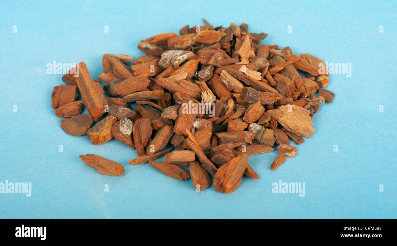Corteccia di China include alcaloidi che sono strettamente correlati al chinino e utilizzata per trattare la malaria. Immagini Stock