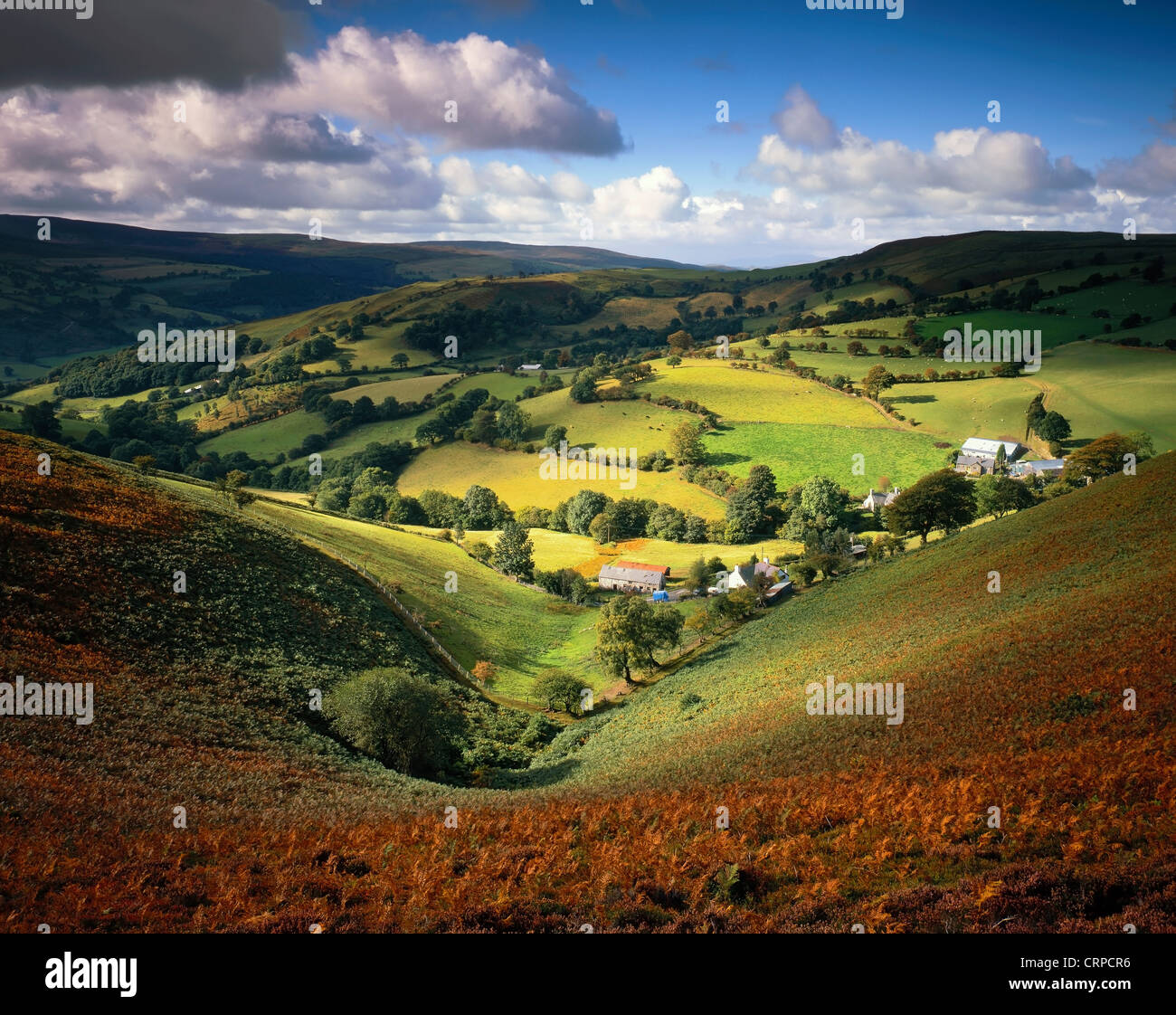 Vista attraverso una felce-valle rivestito in Llantysilio colline a fine estate. Immagini Stock