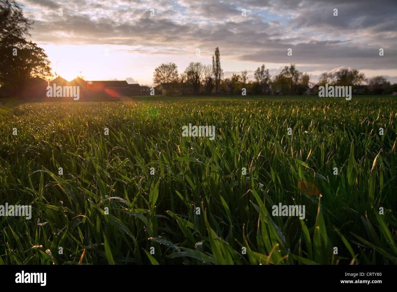 Stapleford farm Cambridge Immagini Stock