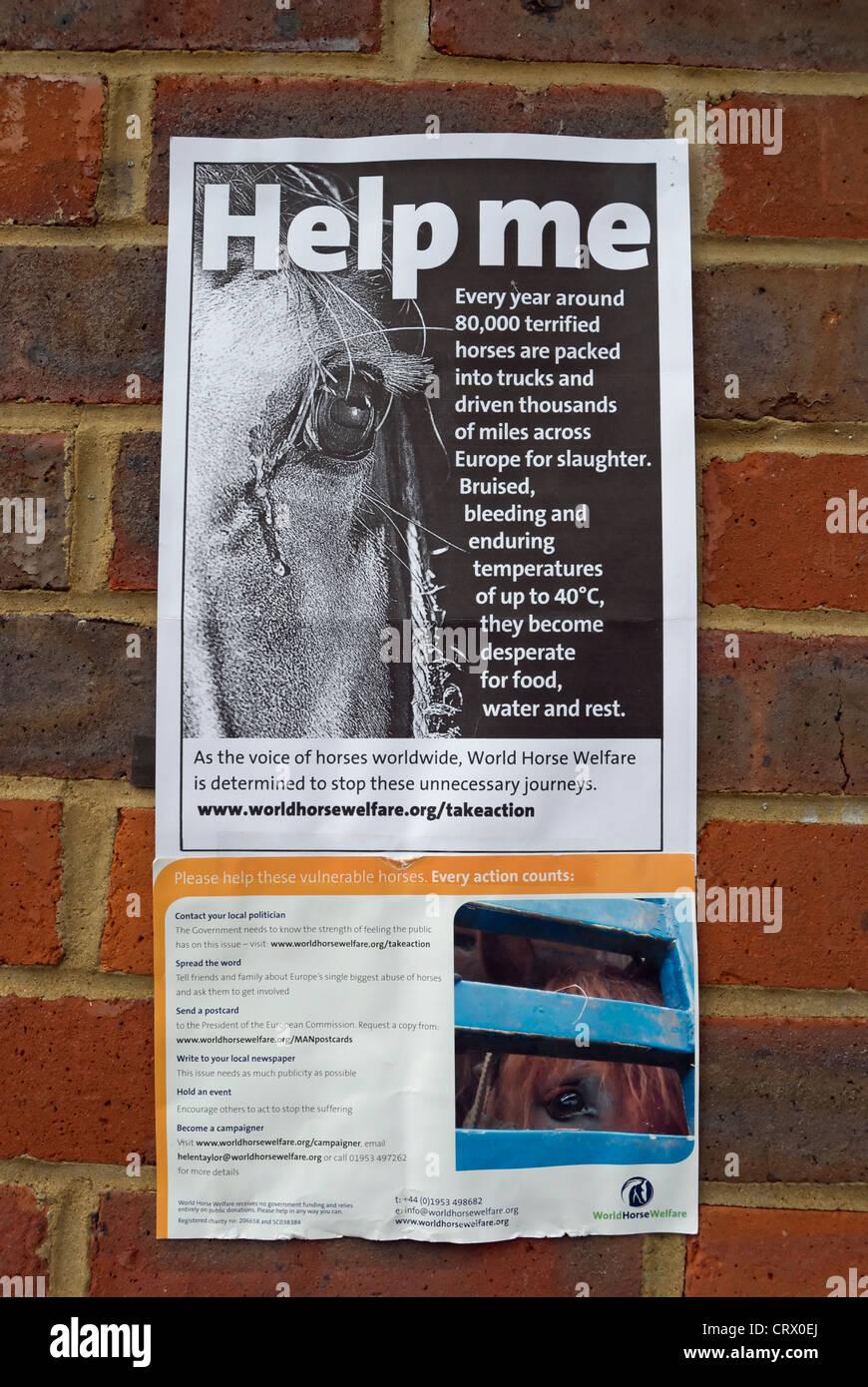 Help me poster da world horse welfare che descrivono il trattamento dei cavalli quando sono trasportati in Europa Immagini Stock
