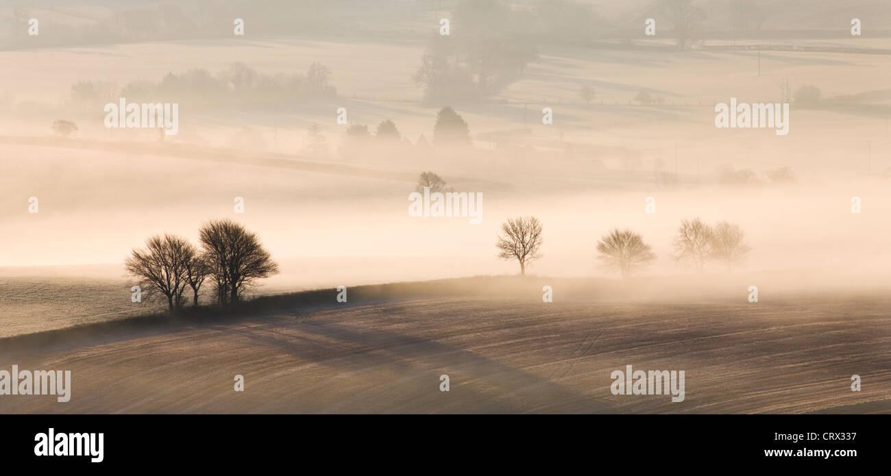 Nebbia copriva il rotolamento Campagna, Vicino Thorverton, Devon, Inghilterra. Inverno (Marzo) 2010. Immagini Stock