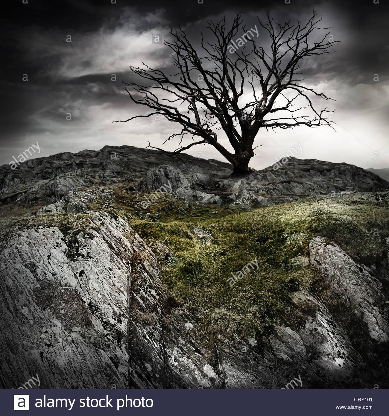vecchio albero solitario Immagini Stock